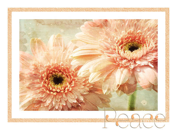 Wall Art - Photograph - Gerber Daisy Peace 2 by Andee Design