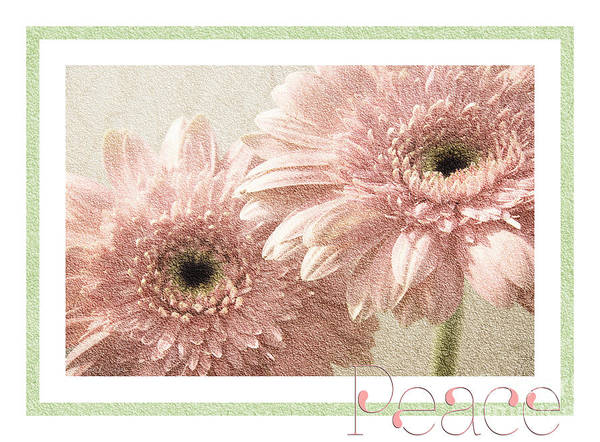 Wall Art - Photograph - Gerber Daisy Peace 3 by Andee Design