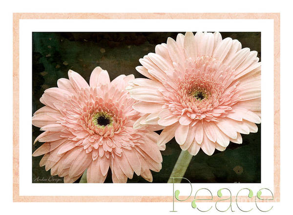 Photograph - Gerber Daisy Peace 5 by Andee Design