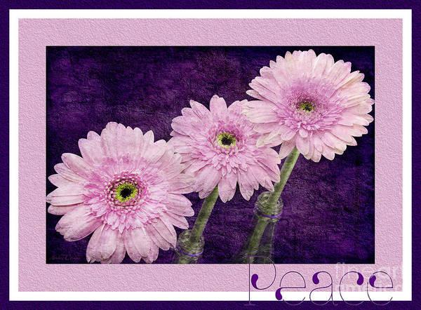 Photograph - Gerber Daisy Peace 7 by Andee Design
