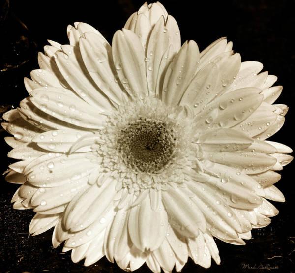 Gerbera Daisy Photograph - Gerbera Daisy by Mark Ashkenazi