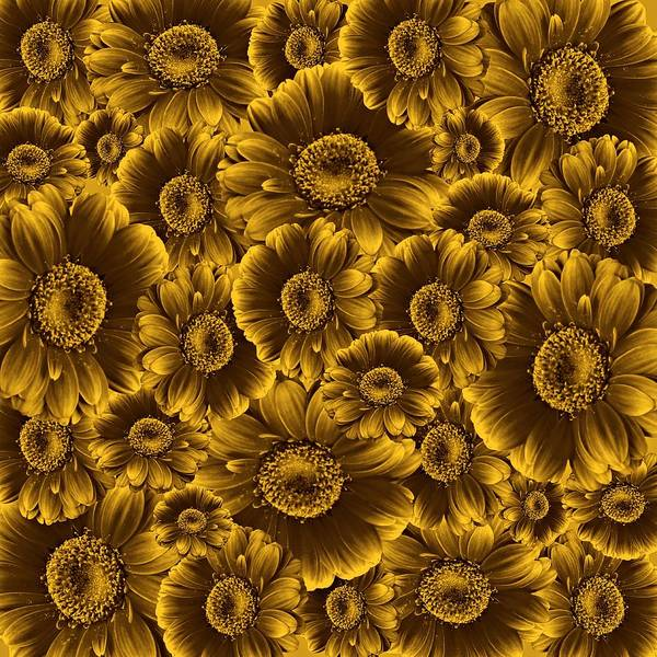 Photograph - Gerbera Flowers Awash In Sepia   by David Dehner