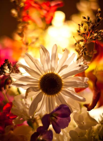Gerbera Daisy Photograph - Gerbera Kaleidoscope by Mike Reid