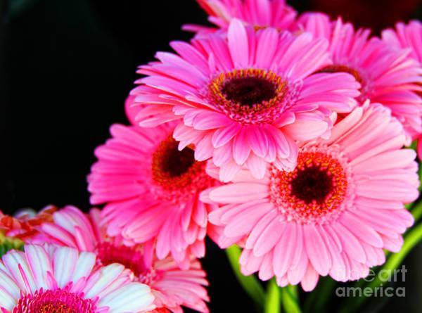 Photograph - Gerberas Bouquet Of Pink By Diana Sainz by Diana Raquel Sainz
