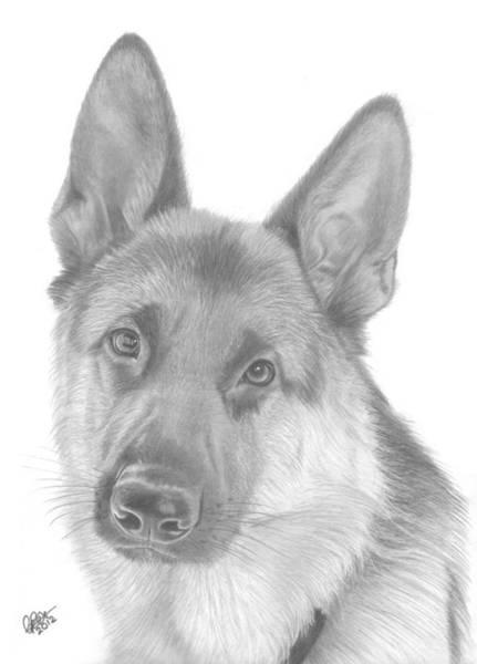 German Shepherd Drawing - German Shepherd by Chris Cox