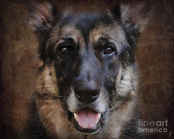 Wall Art - Photograph - German Shepherd Dog by Jai Johnson