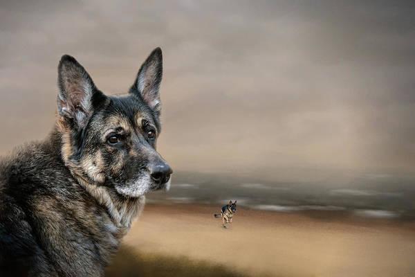 Wall Art - Photograph - German Shepherd Dreaming Of The Beach by Jai Johnson