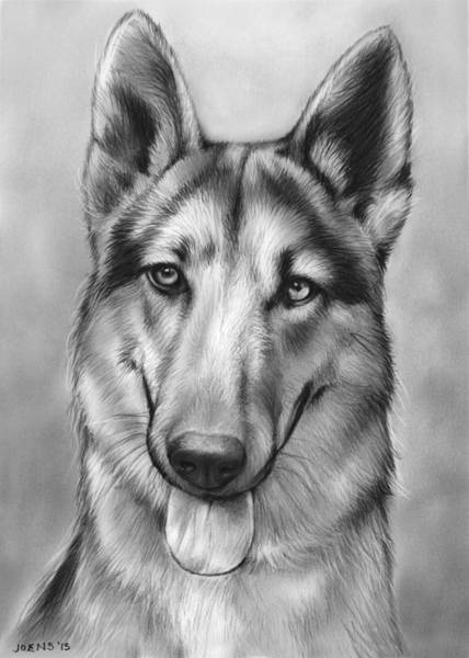 Portraits Drawing - German Shepherd by Greg Joens