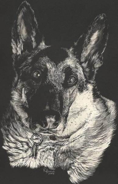 German Shepherd Drawing - German Shepherd by Rachel Hames