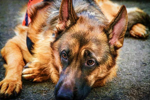 Photograph - German Shepherd Rescue Dog by Eleanor Abramson