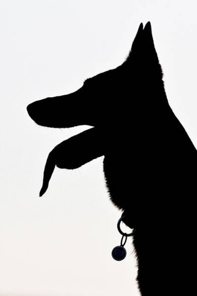 Lethbridge Photograph - German Shepherd Silhouette by Paws On The Run Photography