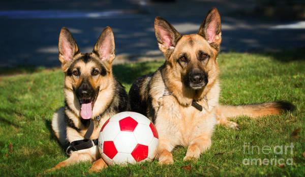 Photograph - German Shepherd Sisters by Eleanor Abramson
