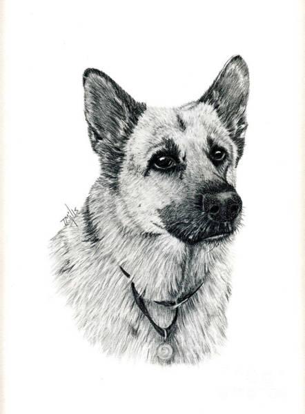 German Shepherd Drawing - German Shepherd by Terri Mills