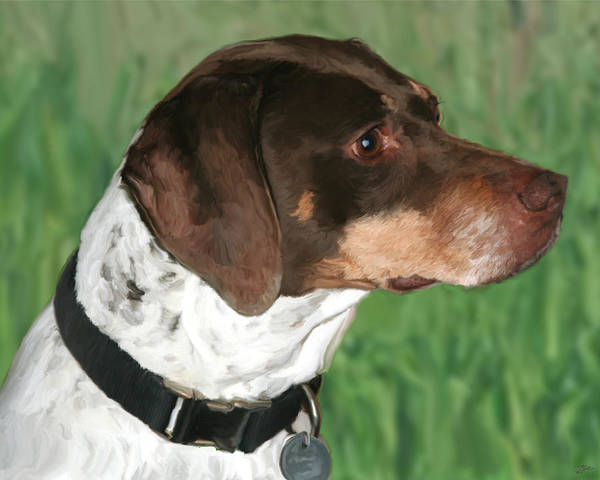 German Pointer Painting - German Shorthaired Pointer by Paul Tagliamonte