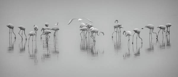 Seaside Photograph - Get Down by Ahmed Thabet