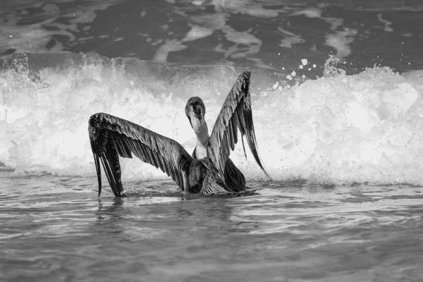 Flagler Beach Photograph - Getting Ready B And W by Jessica Brown