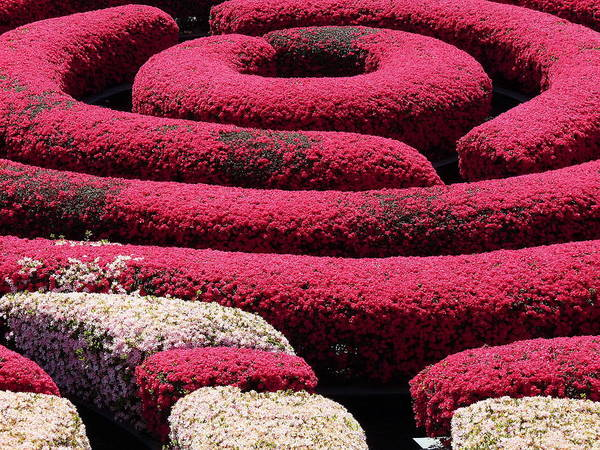 Photograph - Getty Museum Garden by Jeff Lowe