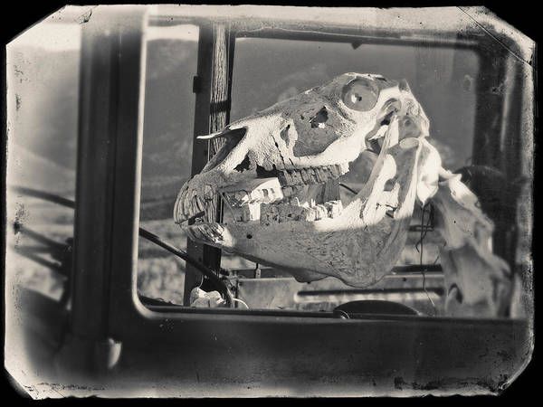 Photograph - Ghost Car Of Equine Death by David Bailey