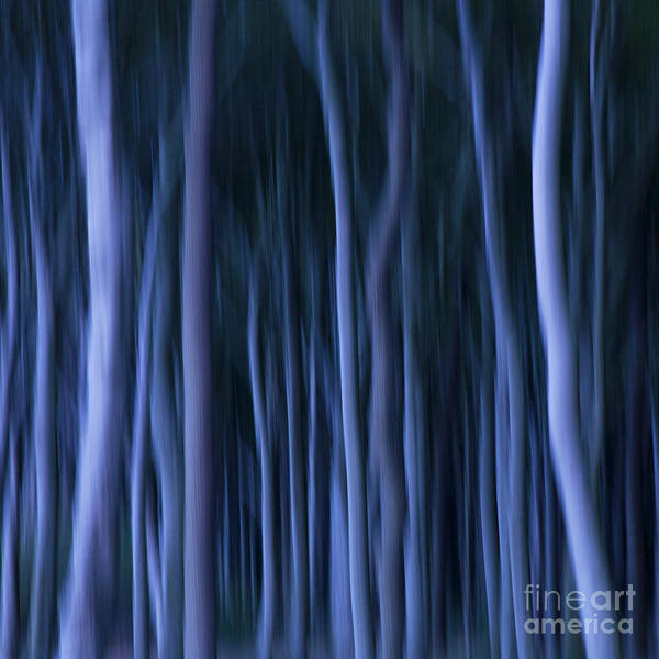 Photograph - Ghost Forest by Heiko Koehrer-Wagner
