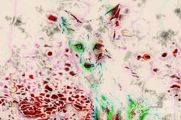 Photograph - Ghost Fox Eyes by Claire Bull