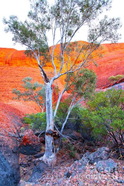Central Australia Photograph - Ghost Gum by Bill  Robinson