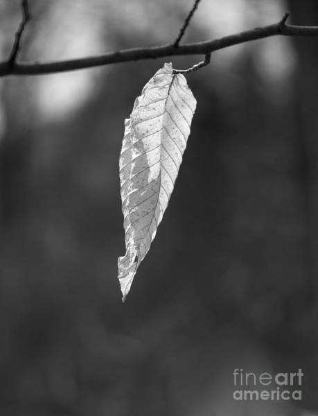 Photograph - Ghost Leaf by Steven Ralser