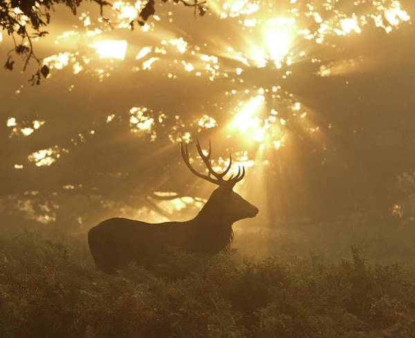 Red Deer Photograph - Ghost Of The Forest by Greg Morgan