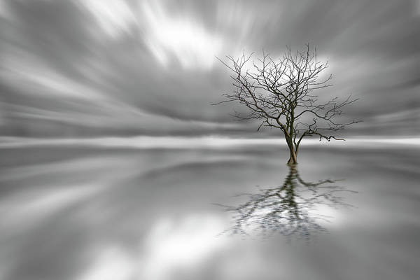 Ghosts Photograph - Ghost Tree by Leif L?ndal
