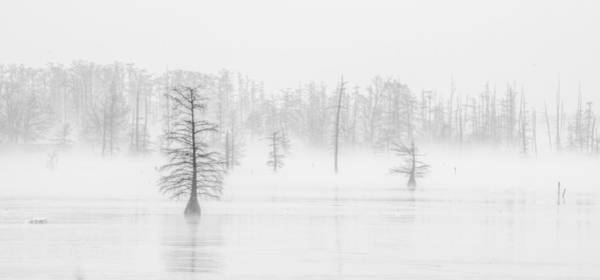 Photograph - Ghost Trees II by David Waldrop