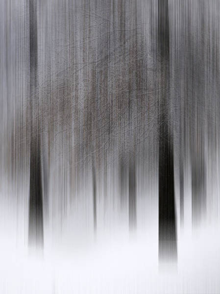 Henniker Wall Art - Photograph - Ghost Trees In A Fresh Snow by Scott Snyder