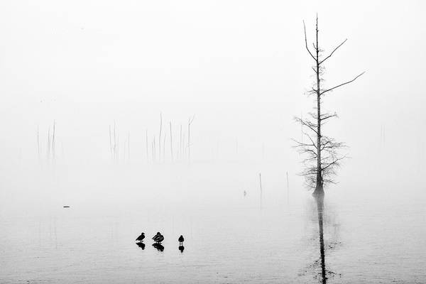 Photograph - Ghost Trees Iv by David Waldrop