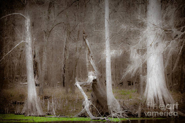 Ghost Trees Art Print