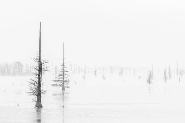 Photograph - Ghost Trees Lake Conway by David Waldrop