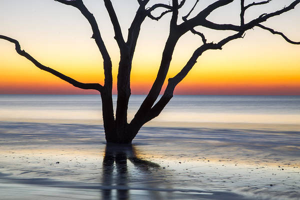 Photograph - Ghost Trees Of Boneyard Beach 03 by Jim Dollar