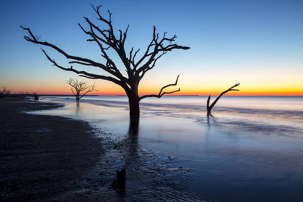 Photograph - Ghost Trees Of Boneyard Beach 10 by Jim Dollar