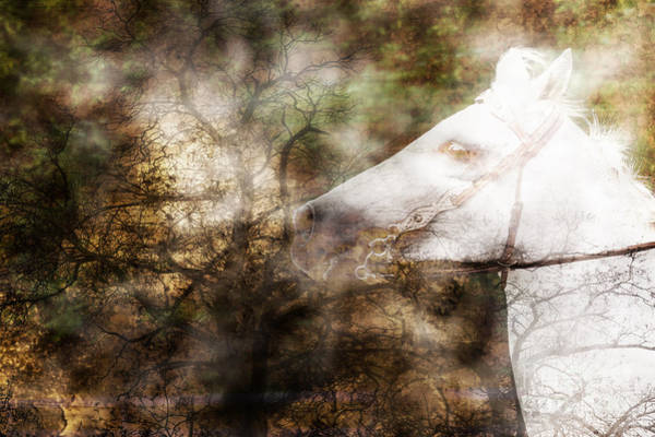 Photograph - Ghostly Ride Surreal Horse Translucent by Eleanor Abramson