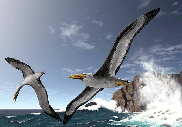 Two Birds Photograph - Giant Extinct Seabirds by Jaime Chirinos/science Photo Library