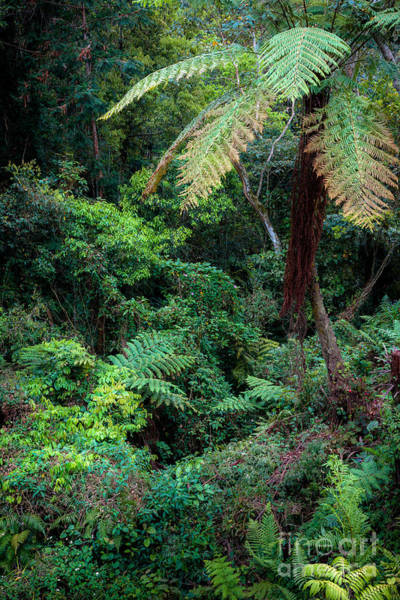 Photograph - Giant Fern by Alexander Kunz