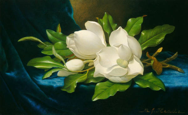 Fowl Wall Art - Painting - Giant Magnolias On A Blue Velvet Cloth by Martin Johnson Heade