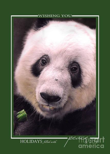 Photograph - Giant Panda Bear Wildlife Christmas Cards by Jai Johnson