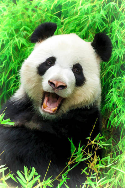 Digital Art - Giant Panda Laughing by Ray Shiu