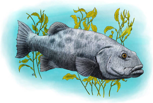 Photograph - Giant Sea Bass by Roger Hall