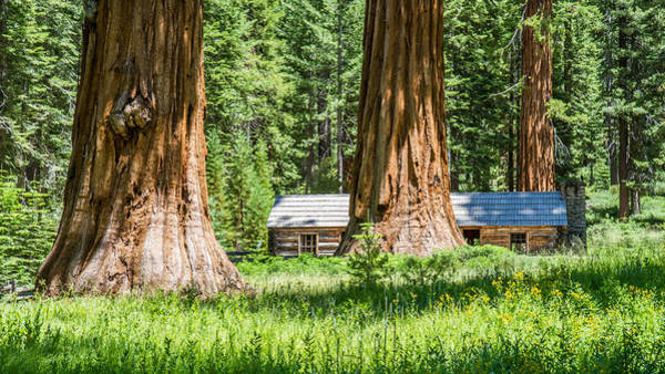 Photograph - Giant Sequoia Trees In Yosemite by Pierre Leclerc Photography