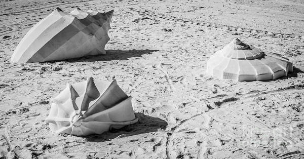 Clarence Photograph - Giant Shell Sculpture - Key West - Black And White by Ian Monk