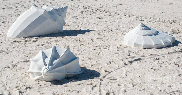 Clarence Photograph - Giant Shell Sculpture - Key West  by Ian Monk