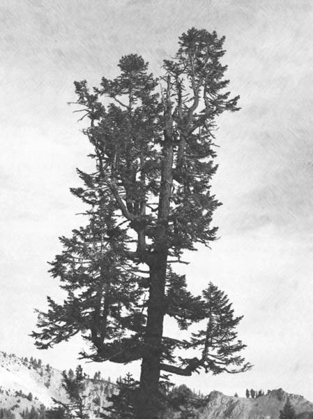 Photograph - Giant Tree by Frank Wilson