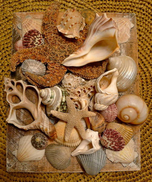 Wall Art - Photograph - Gifts From The Sea by Denise Mazzocco