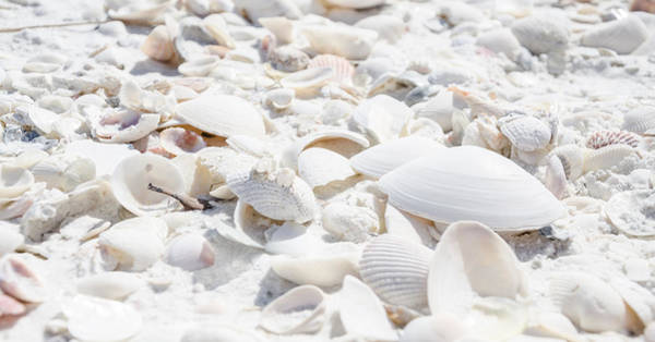 Photograph - Gifts From The Sea by Margaret Pitcher
