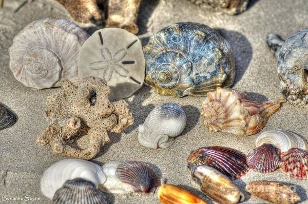 Conch Photograph - Gifts Of The Tides by Benanne Stiens