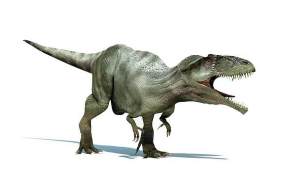 Cretaceous Wall Art - Photograph - Giganotosaurus Dinosaur by Leonello Calvetti/science Photo Library